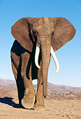 ELE 01 RK0023 19