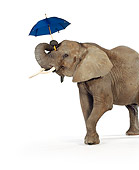 ELE 01 RK0075 02