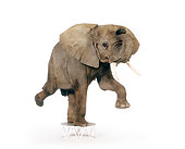 ELE 01 RK0098 04