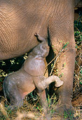 ELE 01 DB0001 01