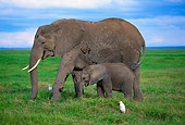 ELE 01 DB0002 01