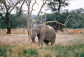 ELE 01 DS0001 01