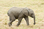 ELE 01 NE0004 01