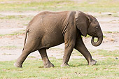 ELE 01 NE0005 01