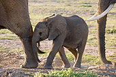 ELE 01 NE0008 01