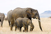 ELE 01 NE0009 01