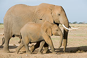 ELE 01 NE0010 01