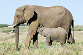 ELE 01 NE0013 01