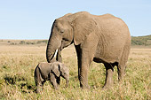 ELE 01 NE0014 01