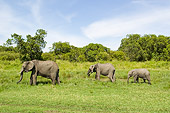 ELE 01 NE0016 01
