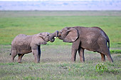 ELE 01 NE0018 01