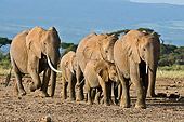 ELE 01 NE0020 01