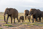 ELE 01 NE0021 01