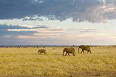 ELE 01 NE0024 01