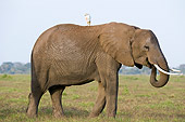 ELE 01 NE0026 01
