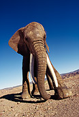 ELE 01 RK0014 10