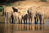 ELE 01 RW0002 01