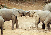 ELE 01 RW0005 01