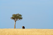 ELE 01 RW0011 01