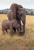 ELE 01 TL0002 01