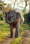 ELE 01 TL0005 01