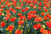 FLW 01 DA0005 01