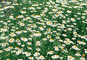 FLW 01 FA0001 01