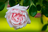 FLW 01 KH0006 01