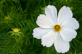 FLW 01 KH0008 01