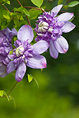 FLW 01 KH0013 01