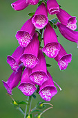 FLW 01 KH0014 01
