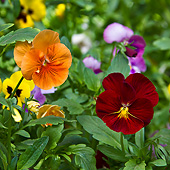 FLW 01 KH0015 01