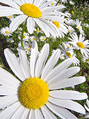 FLW 01 KH0018 01