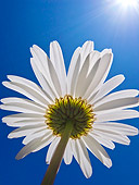 FLW 01 KH0019 01