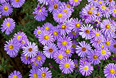 FLW 01 KH0021 01