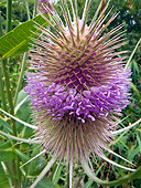 FLW 01 KH0027 01