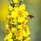 FLW 01 KH0028 01