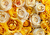 FLW 01 GR0005 01