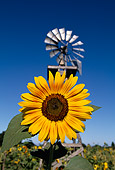 FLW 01 RK0003 01
