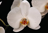 FLW 01 RK0103 13