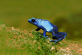 FRG 01 AC0019 01