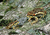 FRG 01 GL0001 01