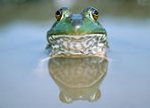 FRG 01 GR0004 01