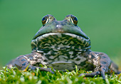 FRG 01 GR0005 01