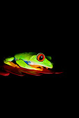 FRG 01 JZ0001 01