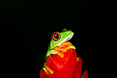 FRG 01 JZ0002 01