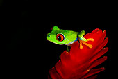 FRG 01 JZ0003 01