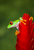 FRG 01 JZ0004 01