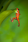 FRG 01 JZ0011 01