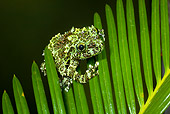 FRG 01 JZ0016 01
